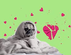an image of a sad dog under blanket with his face only showing in a green background